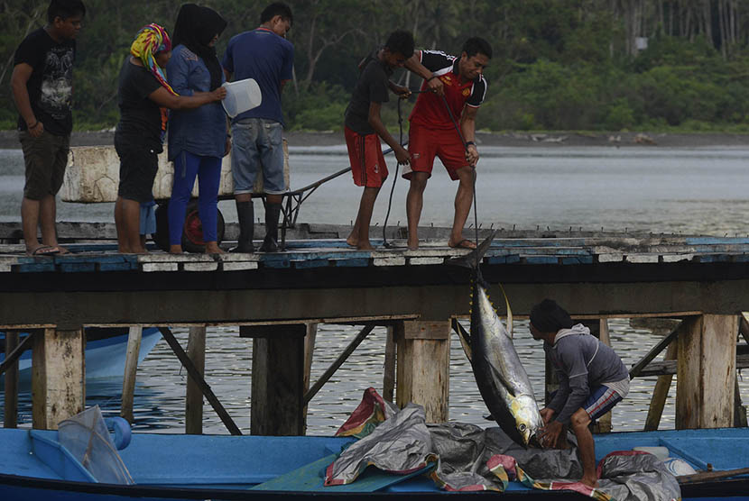 Fishermen unloading tuna fish at the dock of Daeo Village, Morotai Island, on Sunday (November 11, 2016).   (Antara/Fanny Octavianus)