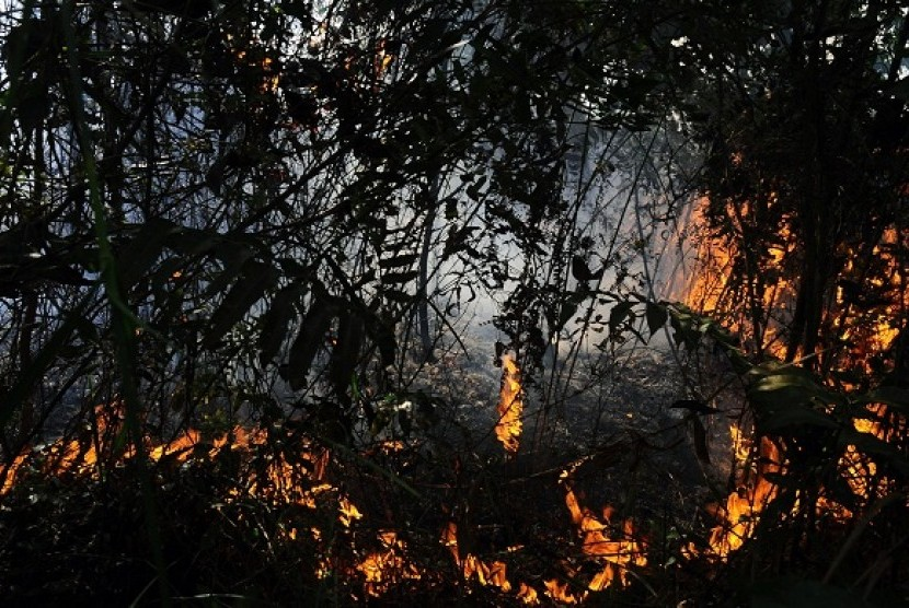 Fire burns out dry bushes and trees in Bengkalis district, Riau. (Illustration)