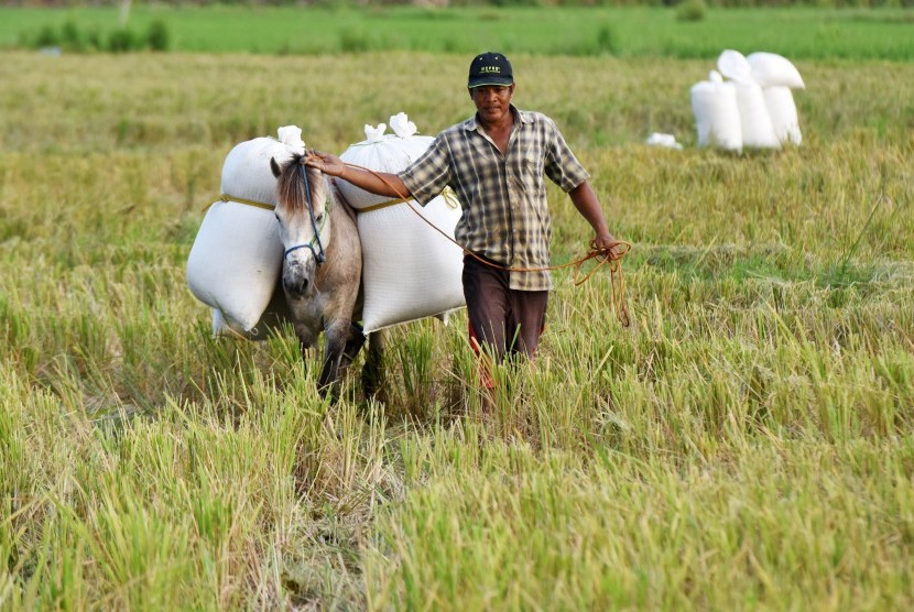 The province of North Sumatra is set to continue to boost its rice production after hitting a record high in 11 years at 4.61 million tons in 2016. (Illustration)